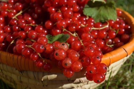 sweet, diet, berry, currant, nutrition, fruit, food, dessert