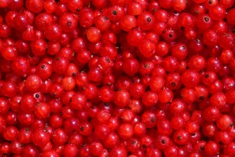 diet, delicious, food, fruit, nutrition, berry, currant