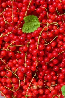 berry, fruit, diet, sweet, delicious, food, currant, nutrition