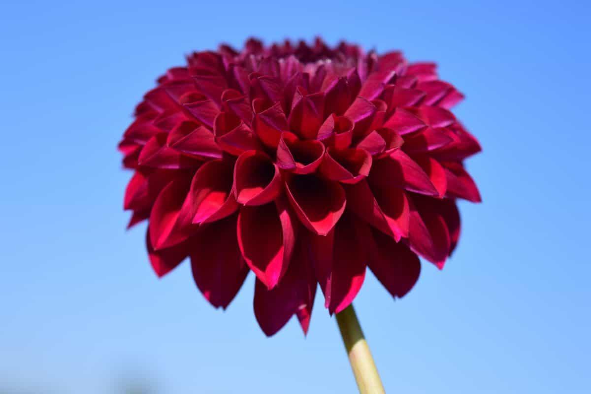 květina, flora, příroda, rostliny, obloha