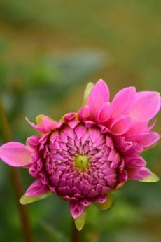 flor, naturaleza, jardín, verano, Pétalo, hoja, bella, flora