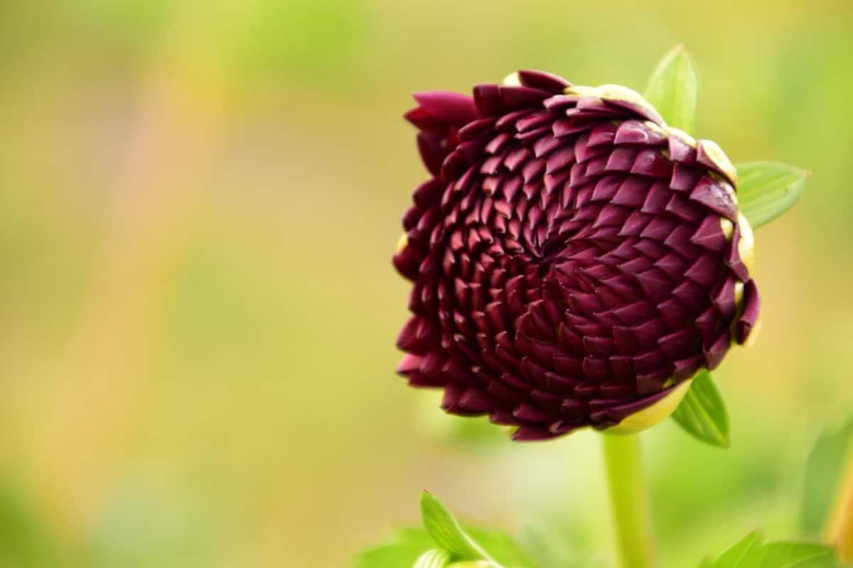 Sommer, Blatt, Natur, Pflanze, Blume