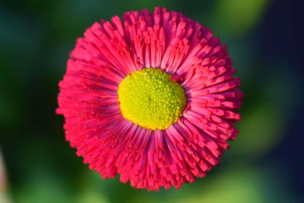 Flora, Sommer, Natur, Blume, Blüte, Garten, Blatt, Pflanze