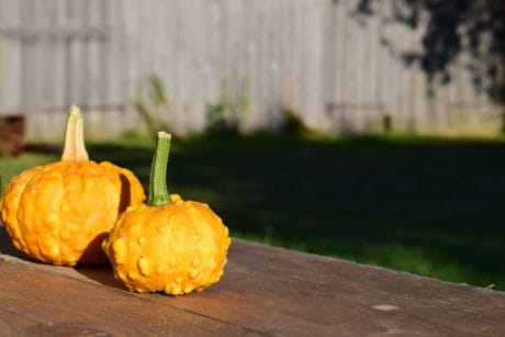 food, pumpkin, nature, vegetable, organic, autumn, flora