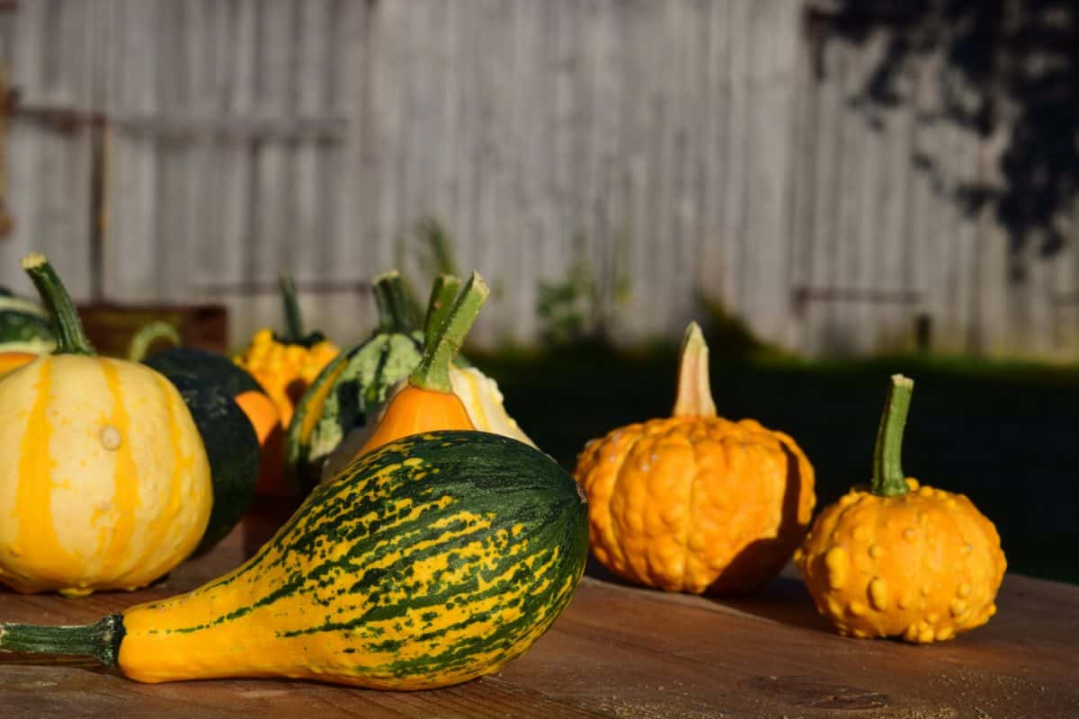 food, vegetable, organic, autumn, pumpkin, nature, flora
