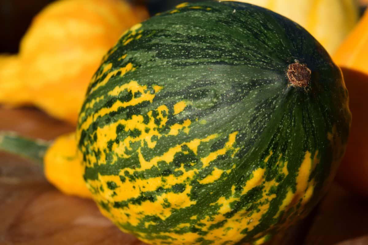 alimentaire, légumes, citrouille, nature, flore, colorée