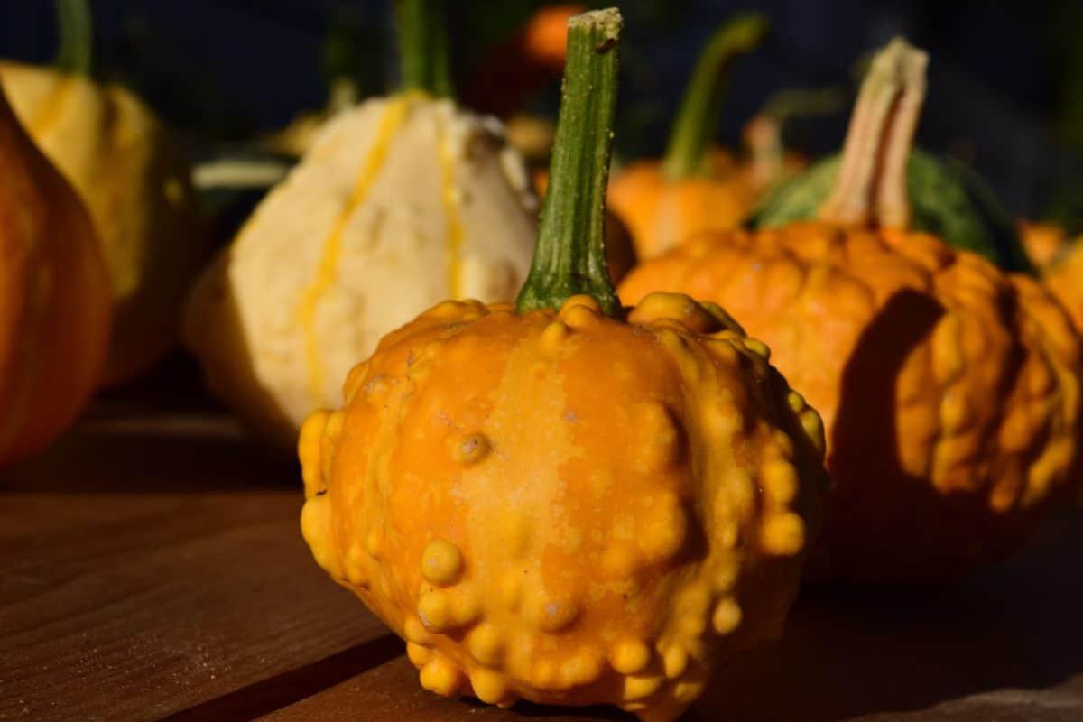 organique, autumn, agriculture, aliments, citrouille, légumes