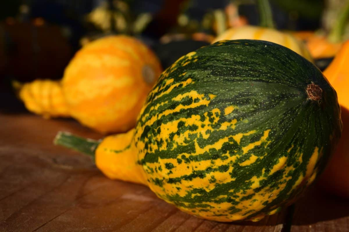 nature, citrouille, nourriture, légume, l'automne, coloré