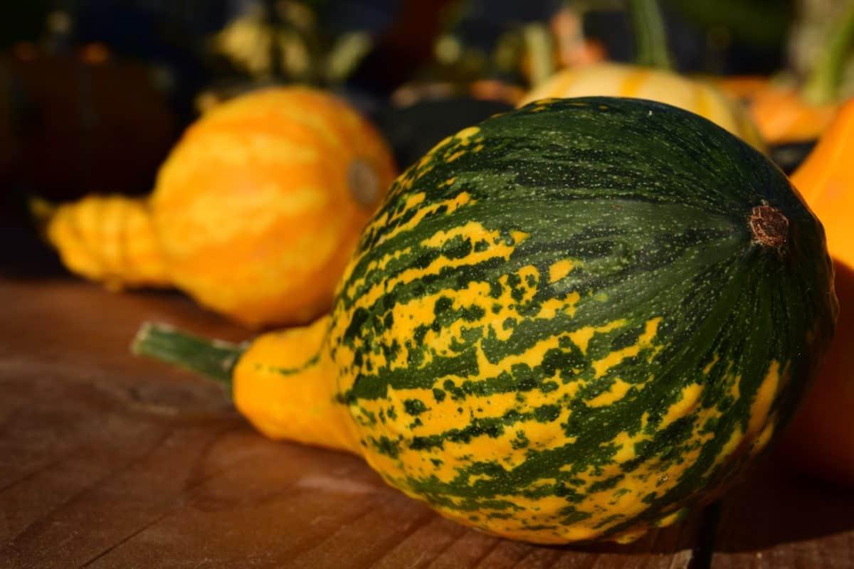 nature, pumpkin, food, vegetable, autumn, colorful