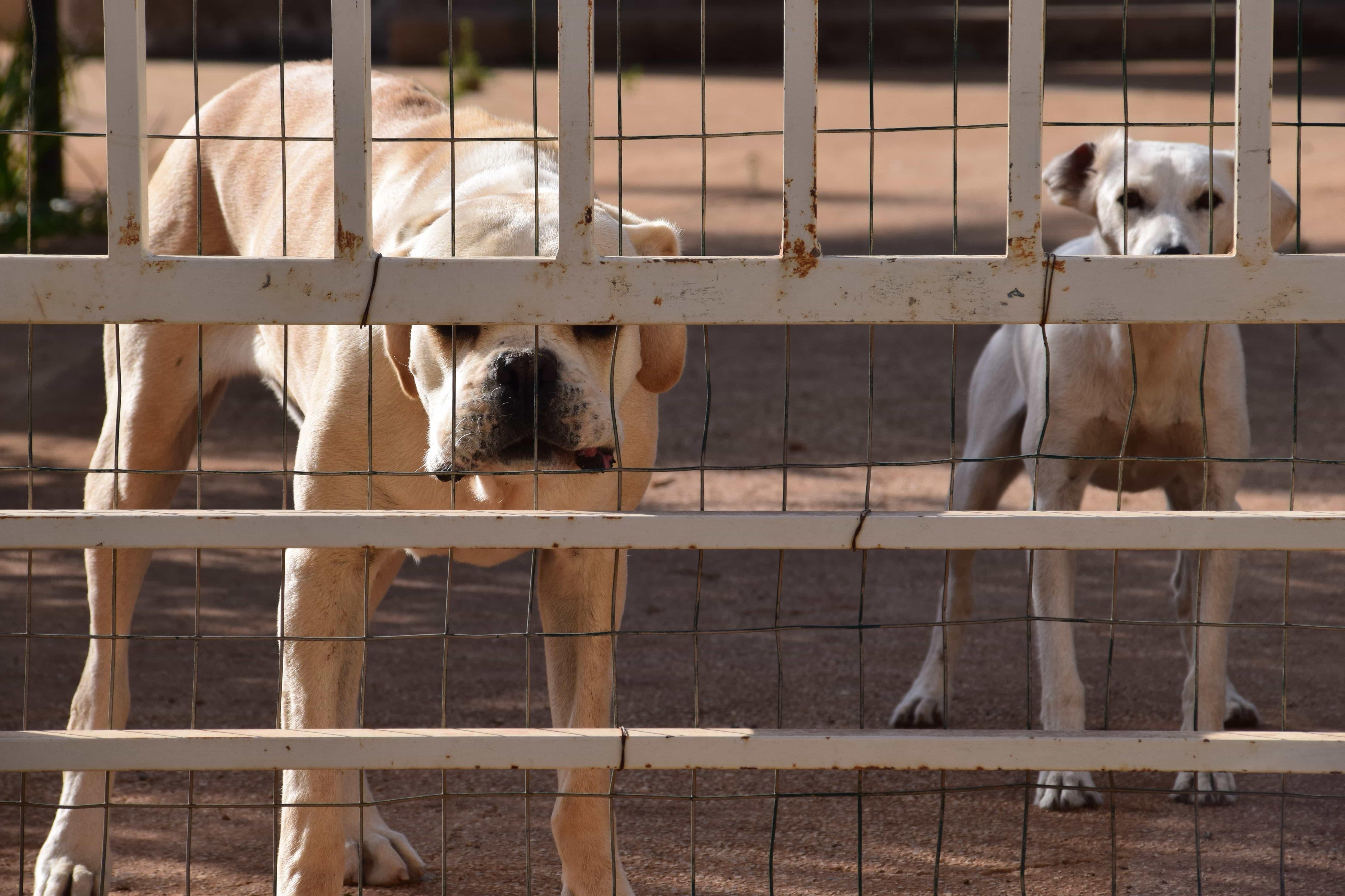 Dog, Fence, Animal, Backyard, Fur