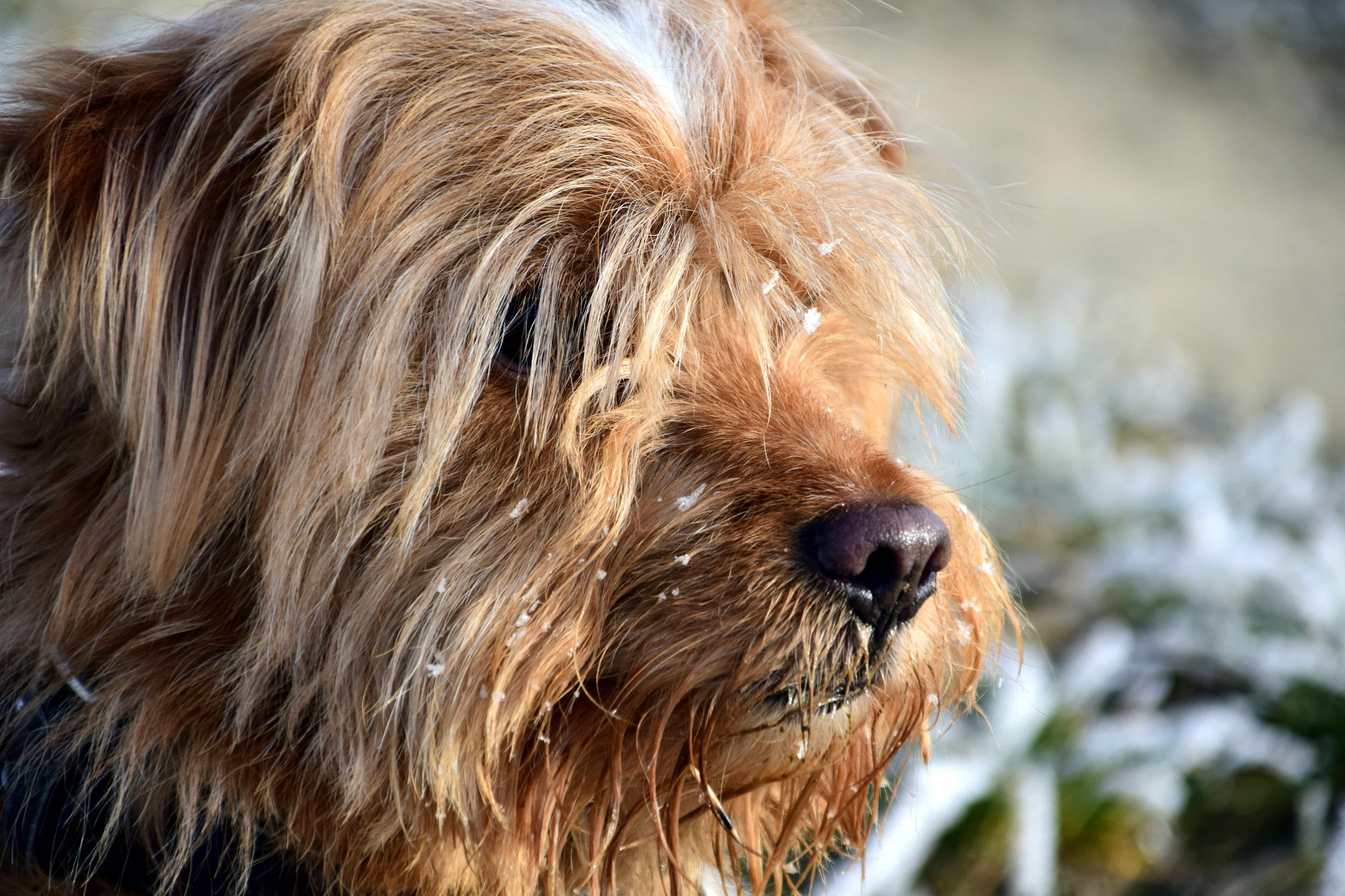 Best Fur Brown Adorable Dog - 2017-11-17-14-48-32  Gallery_661017  .jpg