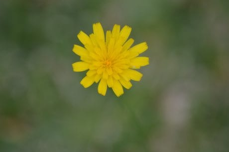 Luonto kukka flora, yrtti, kasvi, kukka, kesä, Puutarha