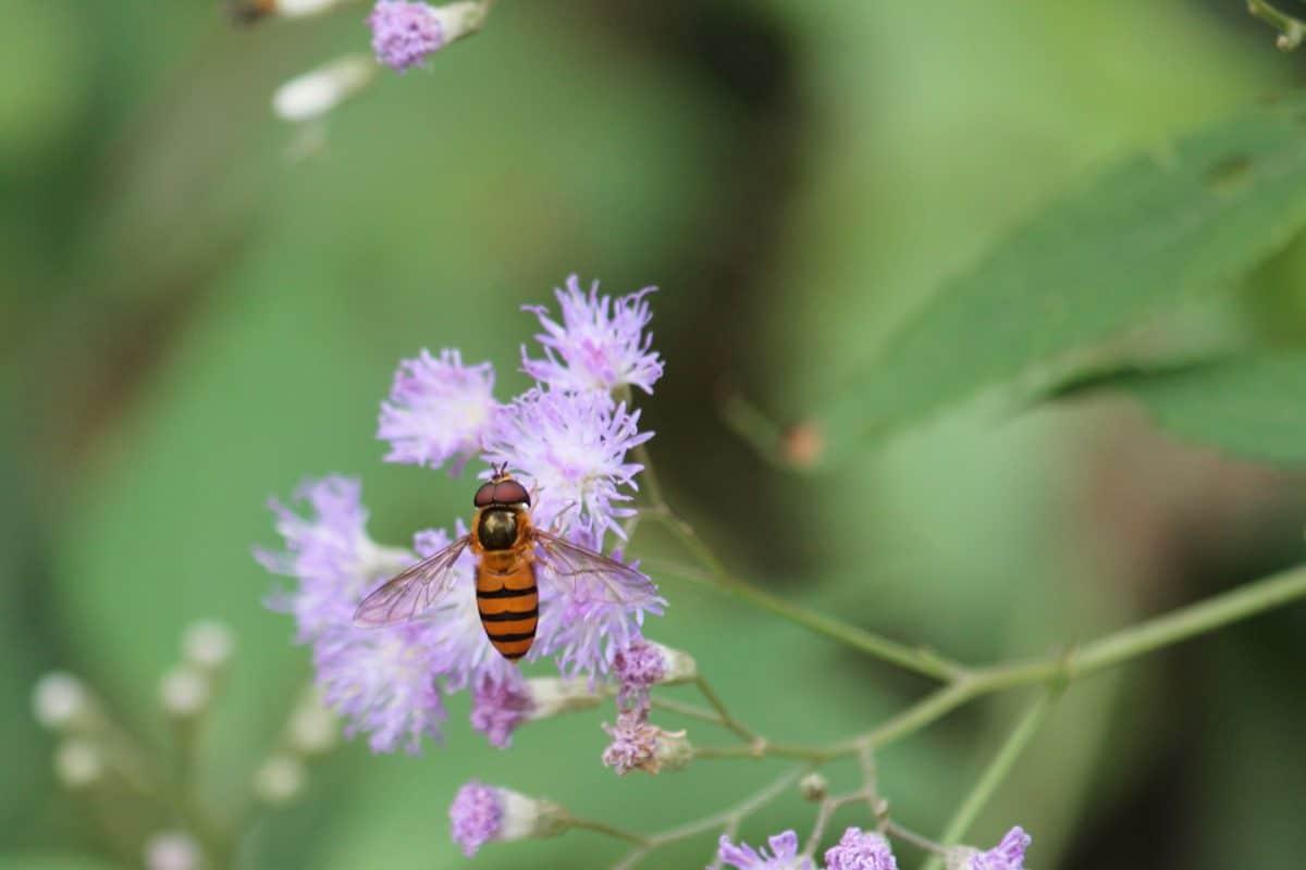 flor, abelha, folha, natureza, jardim, verão, flora, inseto, selvagem