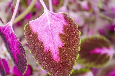 giardino, foglia, natura, erba, colorato, pianta, luce del giorno