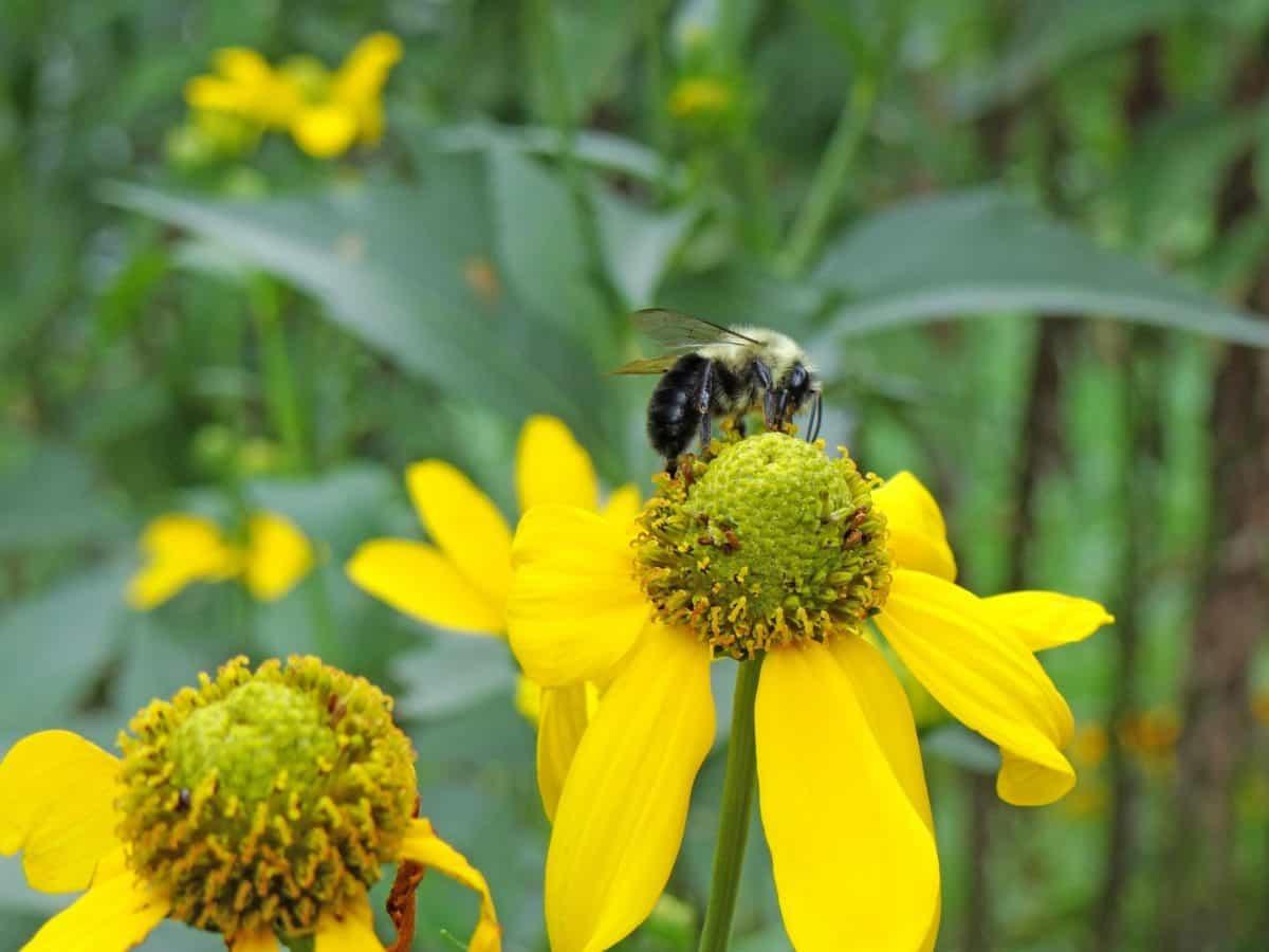 여름, 식물, 꽃가루, 곤충, 매크로, 꿀, 꿀벌, 꽃, 자연, 허브