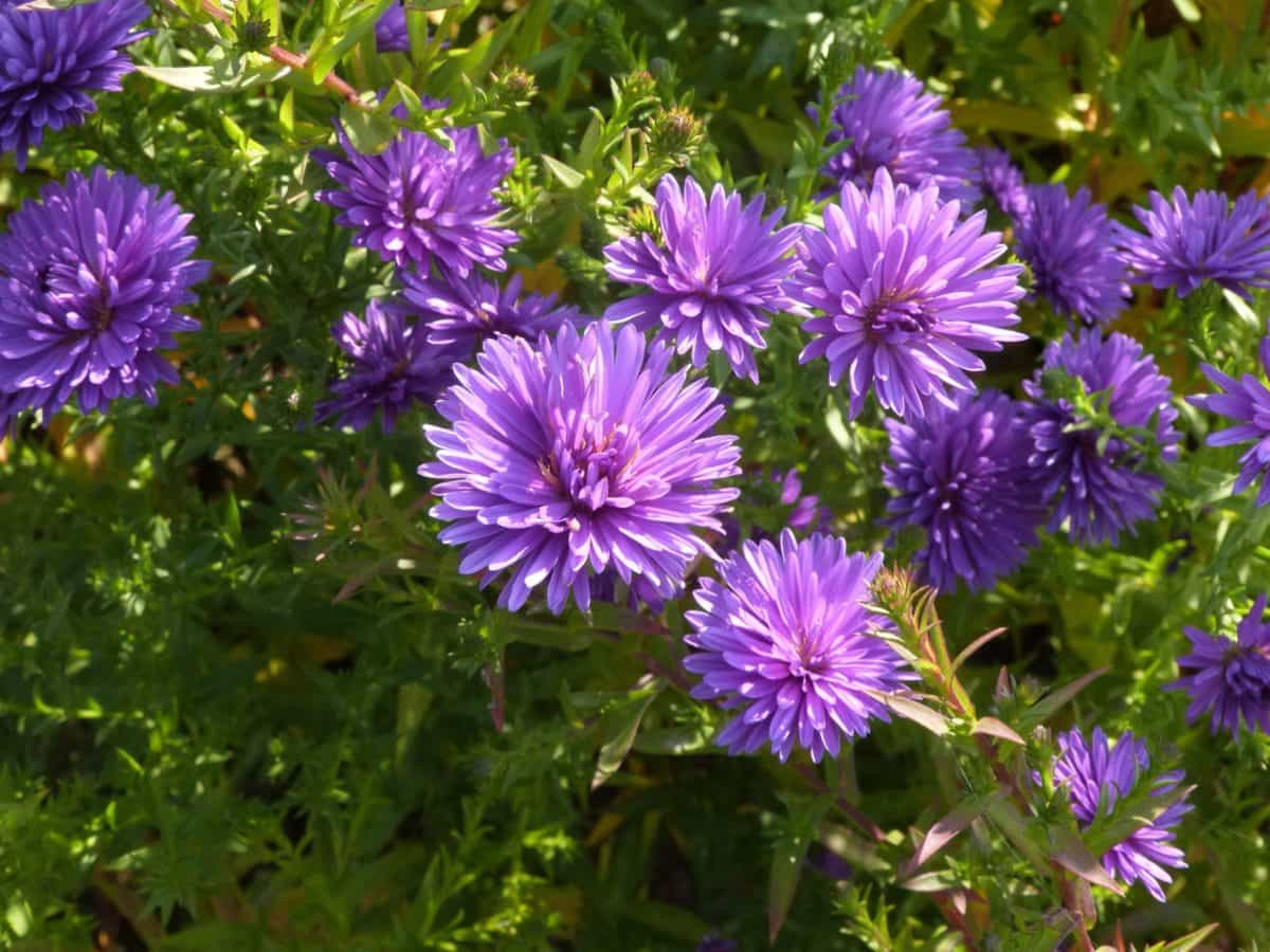 動植物、自然、庭園、夏、ワイルドフラワー、花びら、葉、ハーブ、園芸