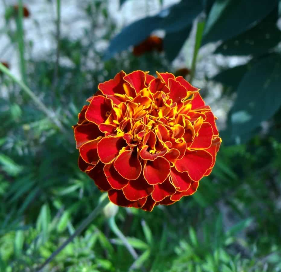 příroda, list, léto, zahrada, flora, květ, byliny