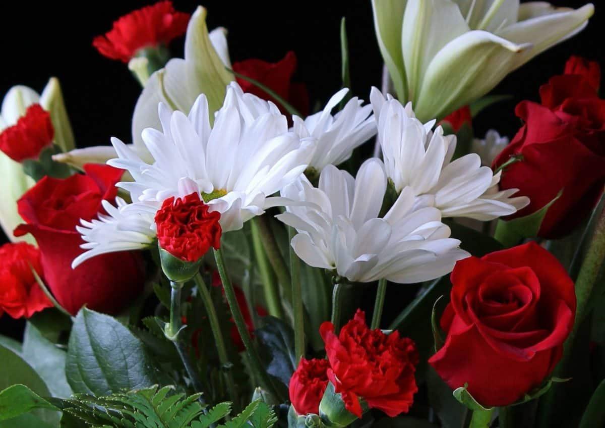 still life, bouquet, flora, leaf, nature, flower, arrangement, pink, blossom