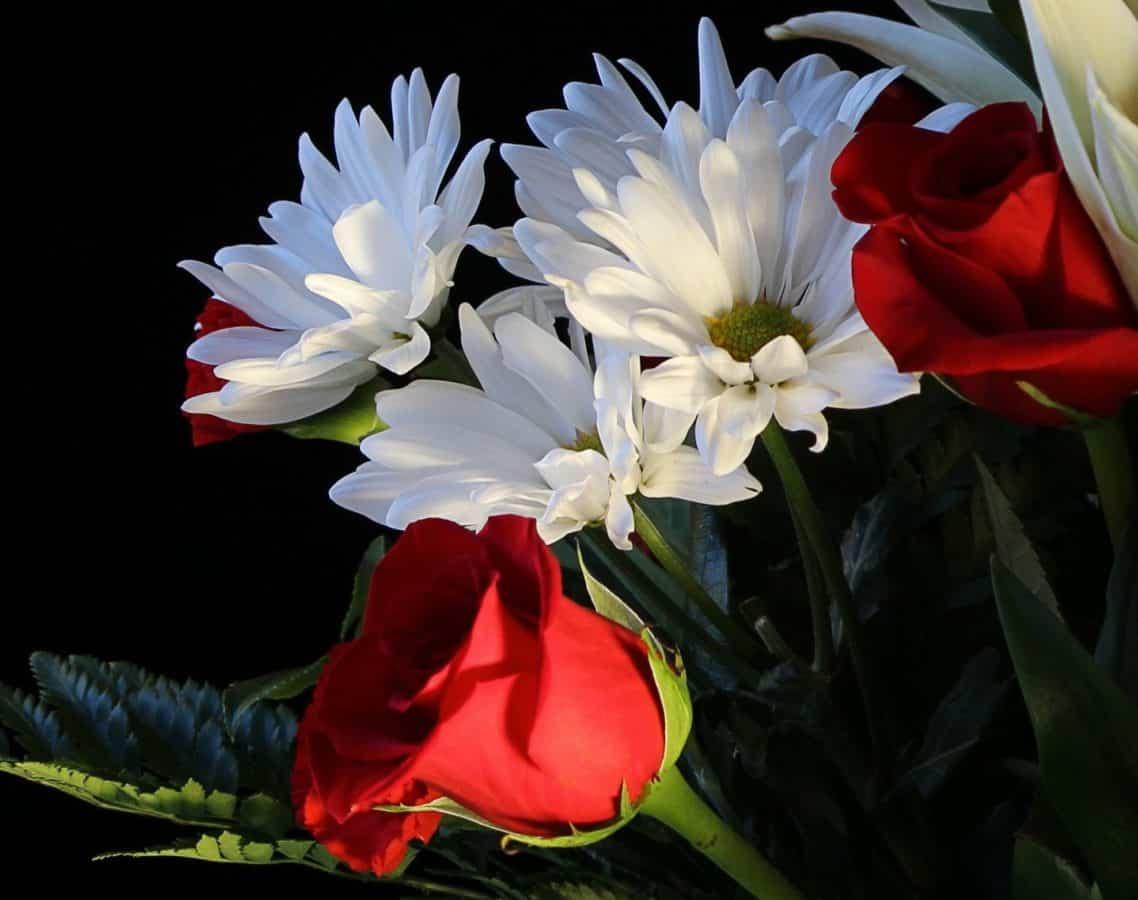 nature, nature morte, bouquet, jardin, feuille, fleur, flore, arrangement, fleurs