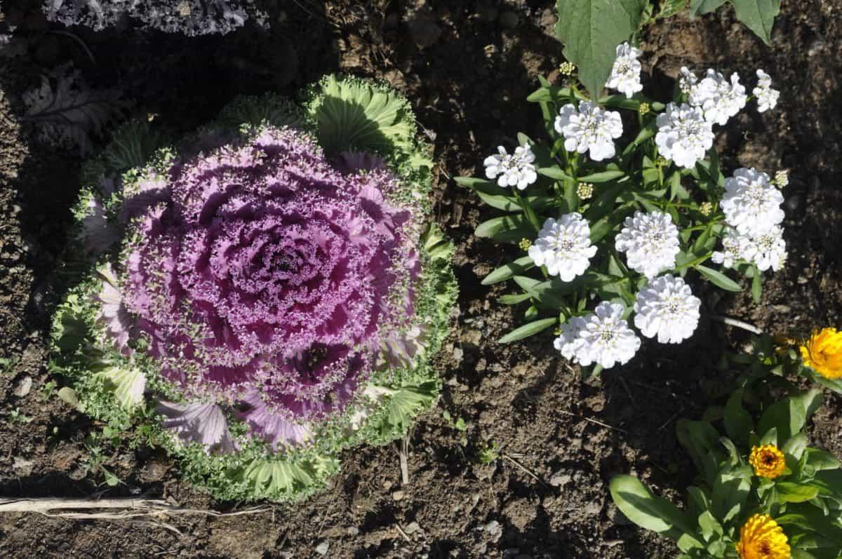 Wildflower, blad, natuur, zomer, flora, Tuin, planten, ecologie