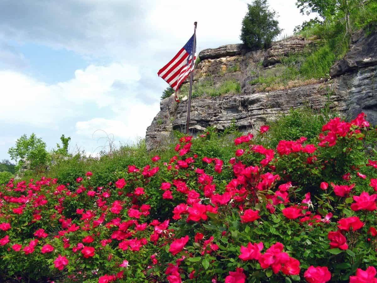 naturaleza, verano, flor, flora, jardín, plantas, flores, bandera