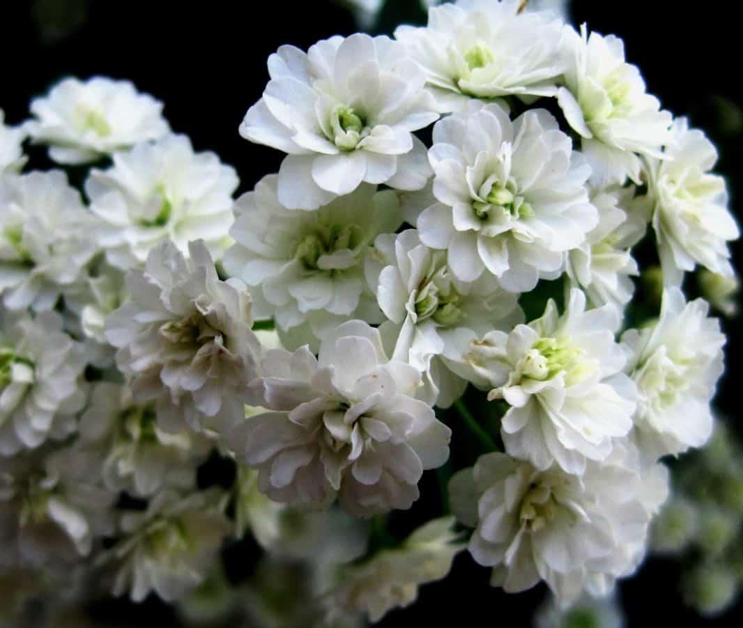bloem, flora, blad, natuur, bloemblaadje, Tuin, planten, bloemen