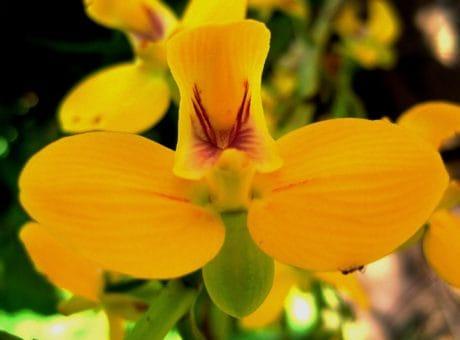 Flora, folha, flor, natureza, planta, erva, pétala, jardim, flor