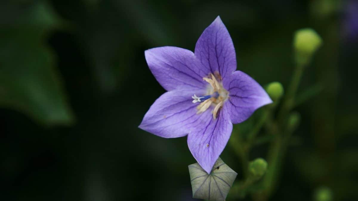 природа, завод, диких квітів, трава, квітка, сад, цвітіння