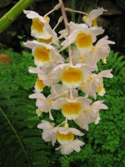 Flora, exotisch, Blüte, Blatt, Natur, schöne, Garten, Blütenblatt
