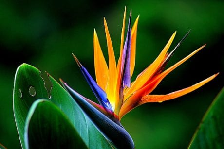 garden, flora, leaf, tropic, colorful, exotic flower, nature, plant