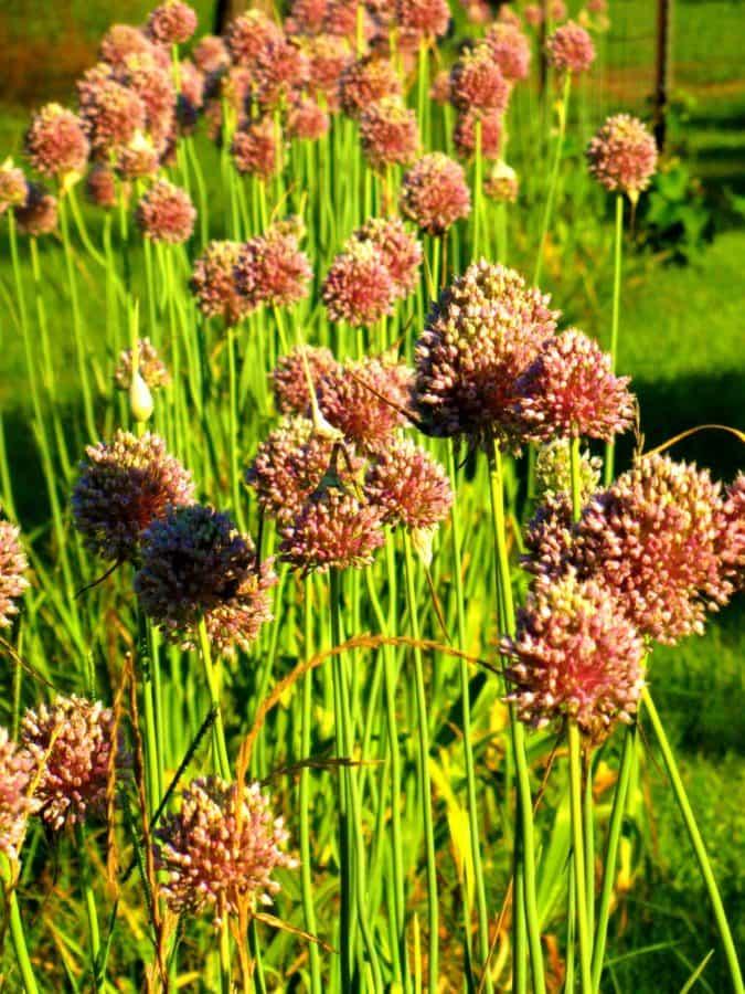 flower, summer, flora, nature, field, grass, plant, herb