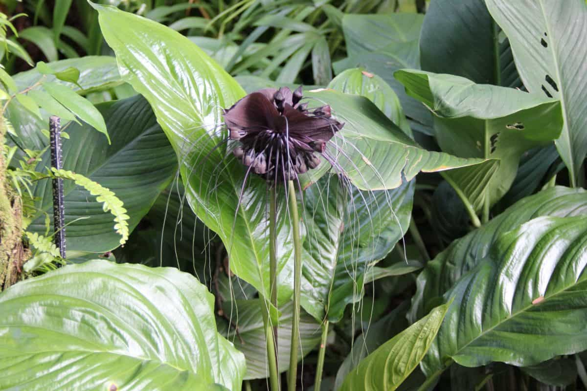 Flora, estate, natura, foglia, giardino, erba, pianta, organismo
