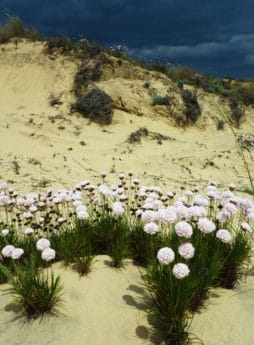 nature, plant, herb, flower, outdoor, sand, hill