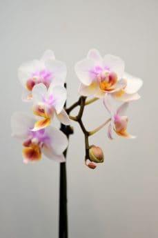 flower, nature, flora, pink, flowers, petal, pollen, blossom