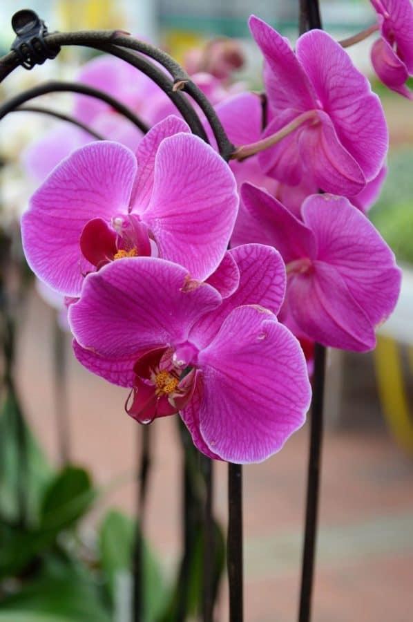 Orquídea, macro, detalle, flores, naturaleza, flora, Pétalo, rosa, planta, floración