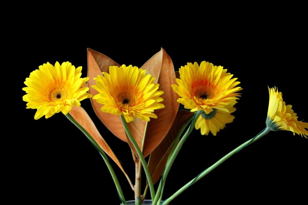 nature, fleurs, flore, tournesol, macro, détail, plante, pétale, été, herb