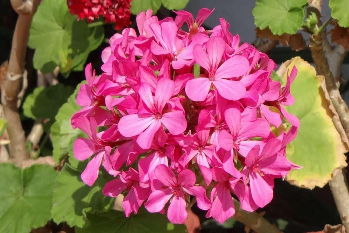 természet, nyári, növény, virág, kert, növény, növény