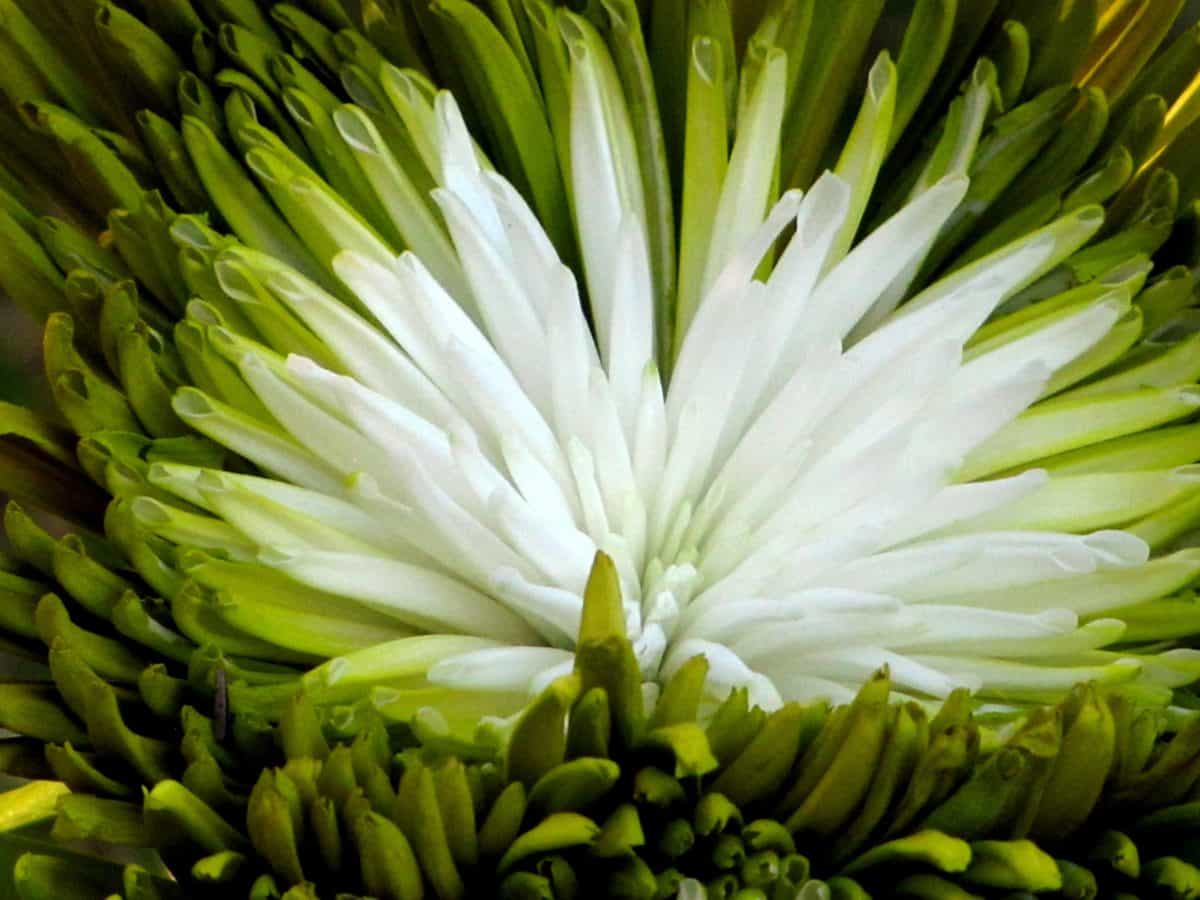 nature, flore, fleur, plante, macro, détail