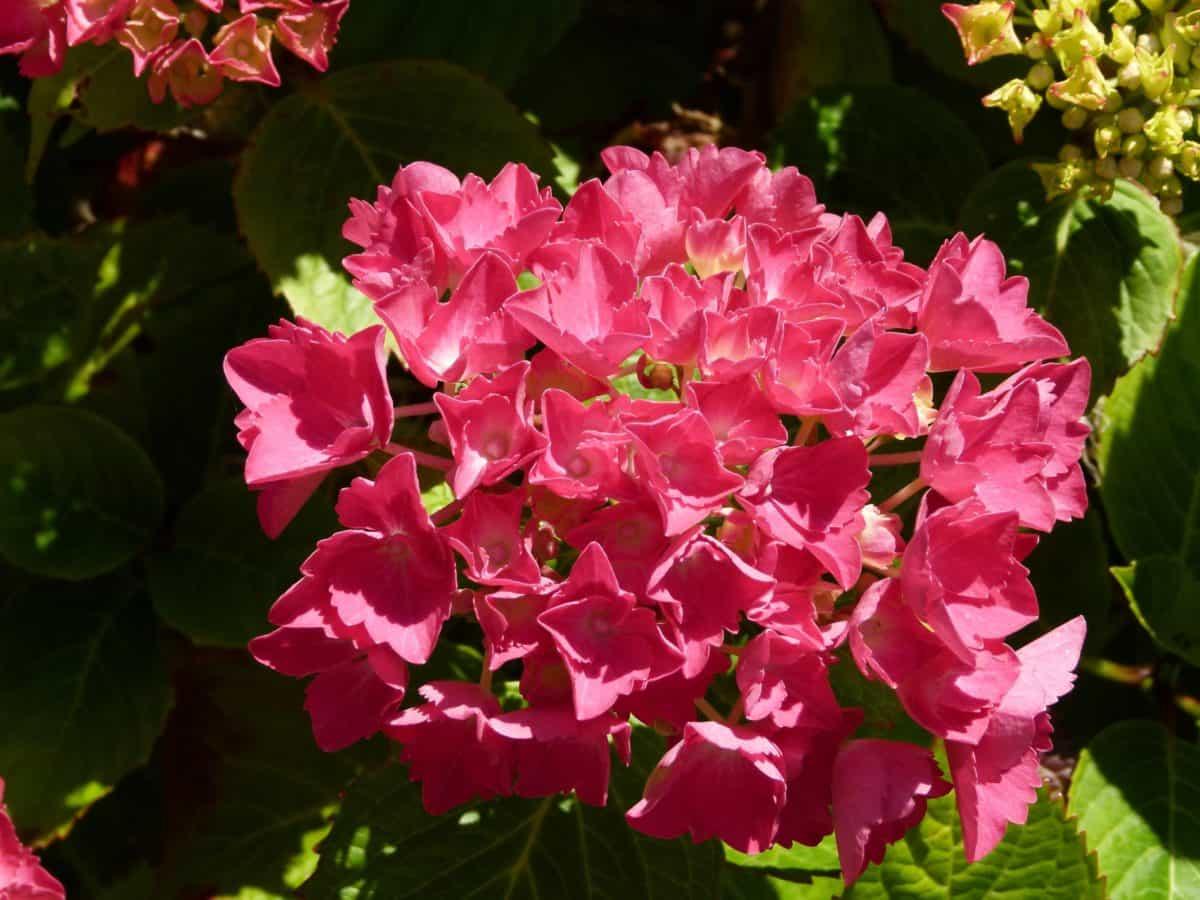 flores, verano, hojas, jardín, Pétalo, naturaleza, flora