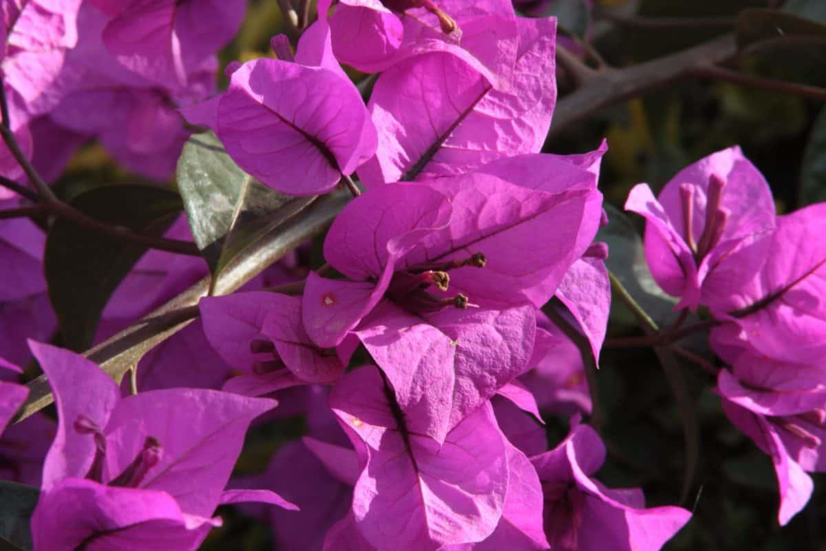 Leaf Záhrada, flóra, kvetina, prírody, rastlín, wildlower