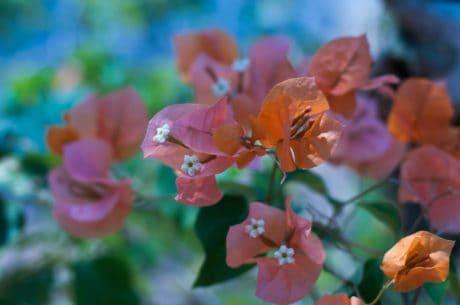 feuille, jardin, fleur, flore, été, nature, plante