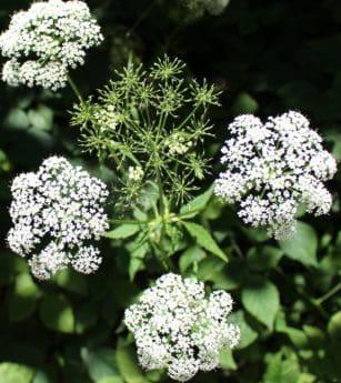 Wiese, Natur, Wildblumen, Garten, Sommer, Flora, Blatt, Blüte, Kraut