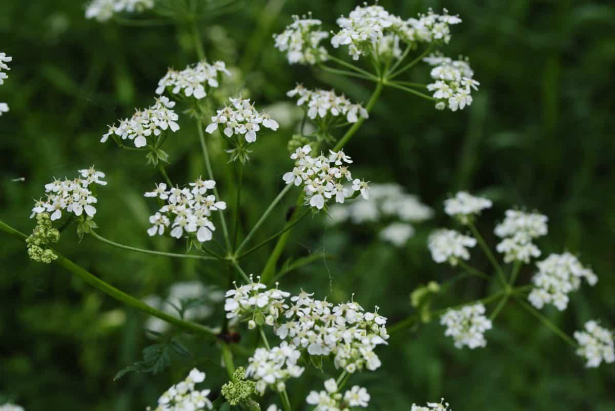 природа, листа, флора, Градина, цветя, билки, растение, организъм