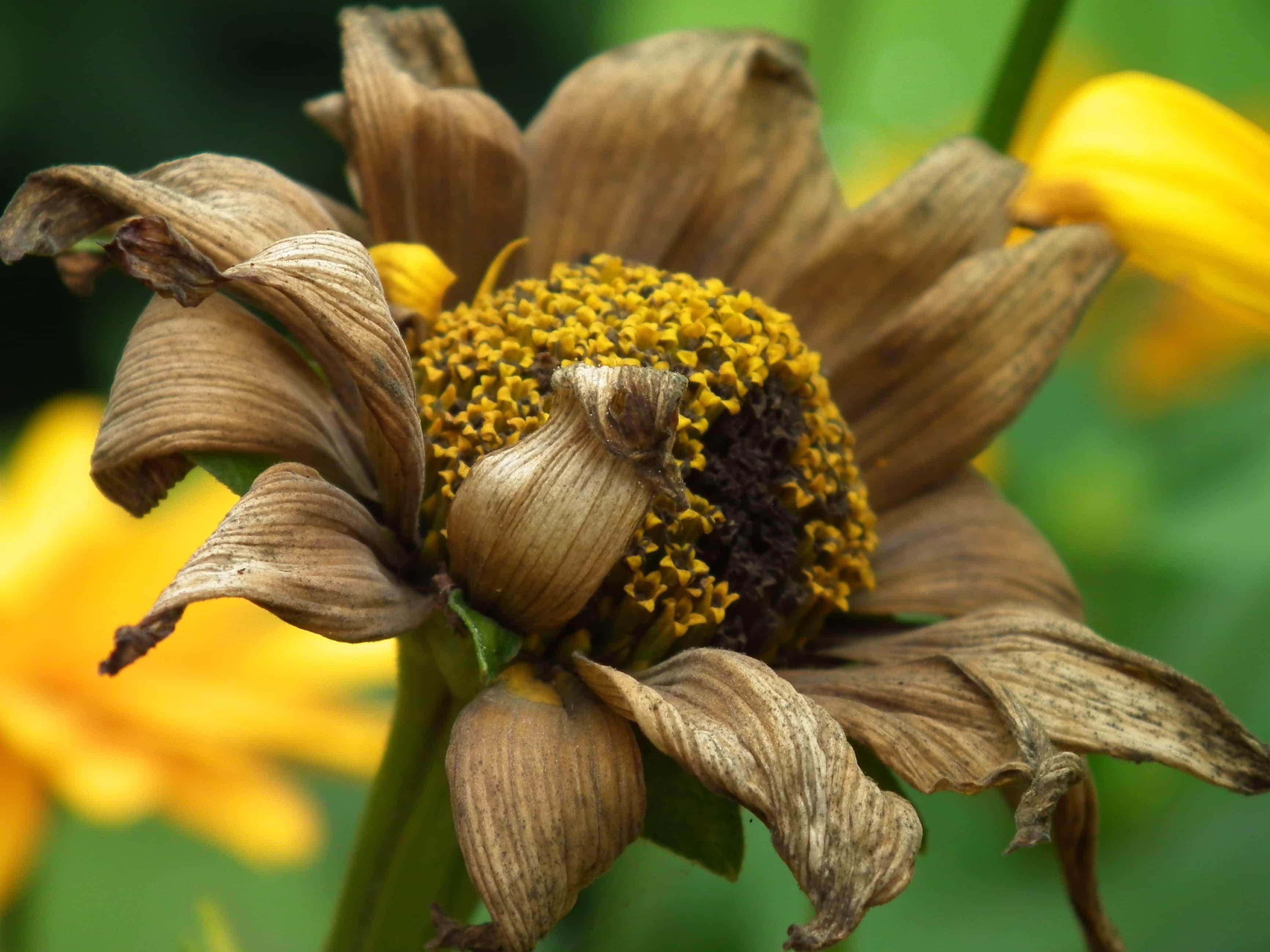 Imagen Gratis Hoja Flora Naturaleza Flor Planta Hierba Pl Tano # Muebles Hoja De Platano