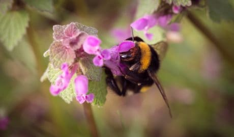 flower, bumblebee, flora, insect, nature, arthropod, garden, plant