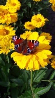 flora, leaf, summer, nature, butterfly, flower, outdoor