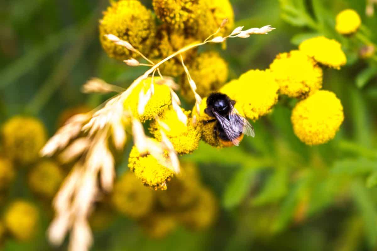 insectes, feuilles, fleur, été, nature, flore, plante, arthropode