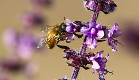 bee, flower, insect, nature, herb, plant, outdoor, macro, daylight