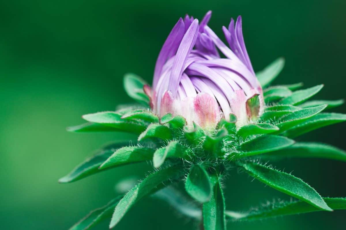 nature, garden, summer, flora, leaf, wildflower, plant, petal