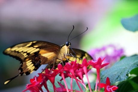 flower, insect, summer, garden, macro, nature, animal, butterfly